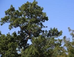 green tree outdoors, fresh air